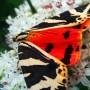 papillon (2009)
