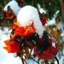 snow fruits (2009)