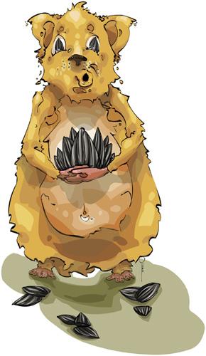 jean pierre le hamster et les graines